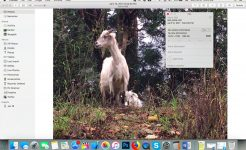 Edit Photo Metadata on Mac – It's Easy!